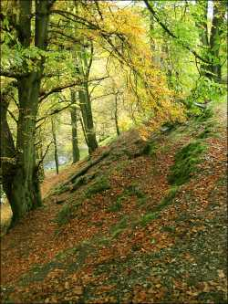 Autumn in the Goyt Valley